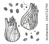fennel isolated set. hand drawn ... | Shutterstock .eps vector #1241712754