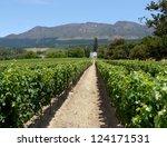 grape farm near cape town ... | Shutterstock . vector #124171531