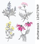 four herbs set | Shutterstock .eps vector #124171969