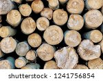 Closeup Of Logs Of Trees In...