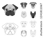muzzle of different breeds of... | Shutterstock . vector #1241811067