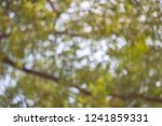 reclaimed background bokeh blur | Shutterstock . vector #1241859331