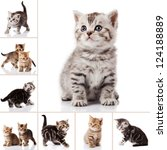 Stock photo kitten isolated on white background cat collection 124188889