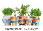 five different herbs in... | Shutterstock . vector #12418999