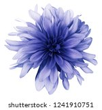 Blue Dahlia  Flower White ...