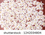 snowdrops galanthus in a... | Shutterstock . vector #1242034804