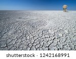 isolated on a white  cracked... | Shutterstock . vector #1242168991