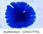blue and white color paint... | Shutterstock . vector #1242177751