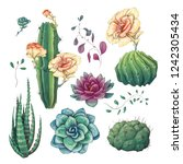 hand drawn colorful cactuses... | Shutterstock .eps vector #1242305434