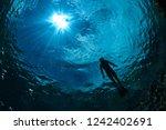 Swimmer And Sun