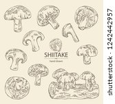 collection of shiitake ... | Shutterstock .eps vector #1242442957
