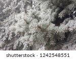winter frost on spruce...   Shutterstock . vector #1242548551