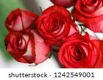 bouquet of red roses. close up... | Shutterstock . vector #1242549001
