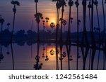 scenic of sunrise twilight... | Shutterstock . vector #1242561484
