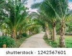 beautiful palm valley. copy... | Shutterstock . vector #1242567601