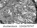 abstract background. monochrome ... | Shutterstock . vector #1242670747