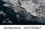 ice floes on the sea surface. | Shutterstock . vector #1242702667