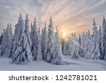 dawn in the winter in the... | Shutterstock . vector #1242781021