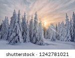 dawn in the winter in the... | Shutterstock . vector #1242781021