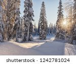 dawn in the winter in the... | Shutterstock . vector #1242781024