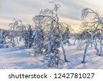 dawn in the winter in the... | Shutterstock . vector #1242781027