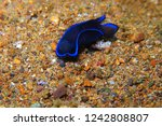 blue and black nudibranch ... | Shutterstock . vector #1242808807