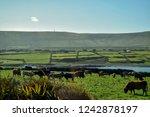 Emerald Green Pasturelands Of...