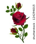 Three Dark Red Roses Isolated...