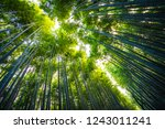 beautiful landscape of bamboo... | Shutterstock . vector #1243011241