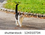 Cat With Extended Tail Walking...