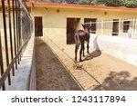 bikaner  india   november 24 ... | Shutterstock . vector #1243117894