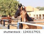 bikaner  india   november 24 ... | Shutterstock . vector #1243117921
