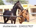 bikaner  india   november 24 ... | Shutterstock . vector #1243117927