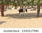 bikaner  india   november 24 ... | Shutterstock . vector #1243117984