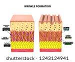the appearance of wrinkles.... | Shutterstock .eps vector #1243124941