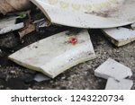 broken china dishes in a pile... | Shutterstock . vector #1243220734