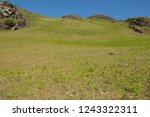 young spring bracken  pteridium ... | Shutterstock . vector #1243322311