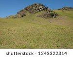 young spring bracken  pteridium ... | Shutterstock . vector #1243322314