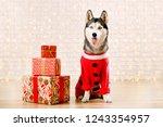portrait of young bruebred... | Shutterstock . vector #1243354957