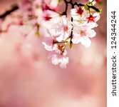 spring cherry blossoms | Shutterstock . vector #124344244