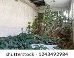 ruin and ivy | Shutterstock . vector #1243492984