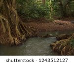 mysterious indiana river ... | Shutterstock . vector #1243512127