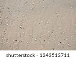 sandy seabed with pebbles and... | Shutterstock . vector #1243513711