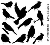 Stock vector silhouettes of birds in black color 1243631011