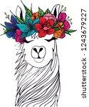 black and white llama sketch...   Shutterstock . vector #1243679227