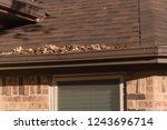 close up rain gutter on...   Shutterstock . vector #1243696714