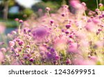 pink floral and blur background | Shutterstock . vector #1243699951
