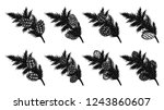 set of pine leaf with pine... | Shutterstock .eps vector #1243860607