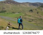 female walker with a lurcher... | Shutterstock . vector #1243874677