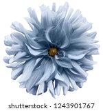 light blue flower dahlia  on a... | Shutterstock . vector #1243901767